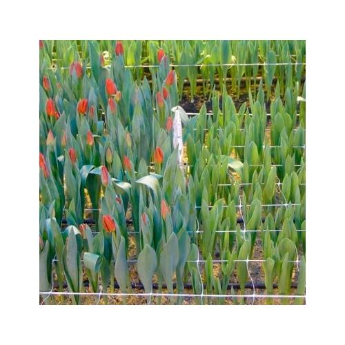 Сетка цветочная, шпалерная 1,2 м
