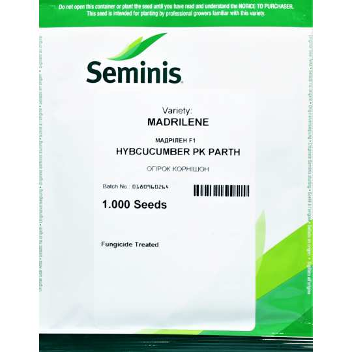 Огірок  Мадрілене  F1 | MADRILENE  Seminis