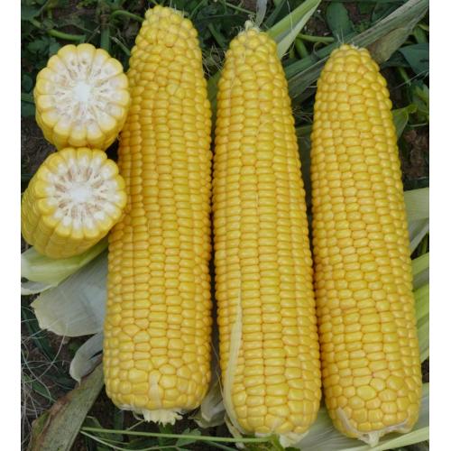 Кукуруза Добрыня F1 lark seeds