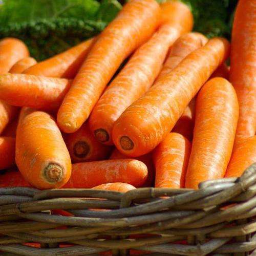 Морковь МАТЧ F1 | MATCH F1 Сlause