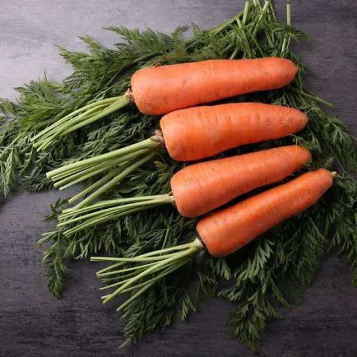 Морковка  МІРАФЛОРЕС  F1 | MIRAFLORENS Clause