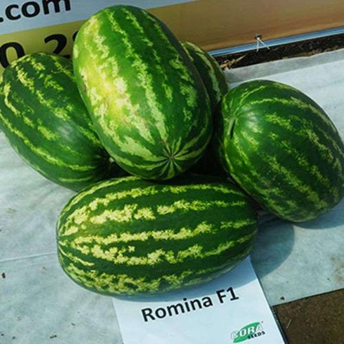 Кавун РОМІНА F1 | ROMINA cora seeds