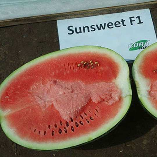 Кавун САНСВІТ F1|SUN SWEET F1 cora seeds