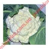 Капуста цветная CRX 13949 F1 Cora Seeds