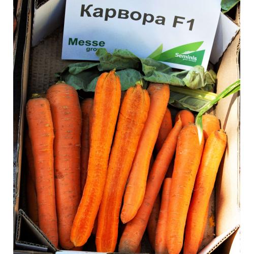 Морковь КАРВОРА F1 | CARVORA Seminis