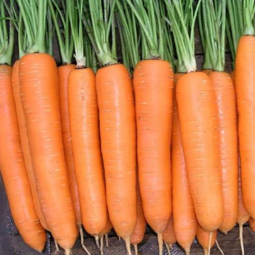 Морковь ФОРТО F1 | FORTO Seminis