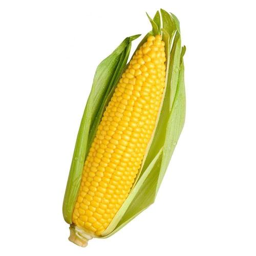Кукуруза ТУСОН F1 | TYSON F1 Syngenta