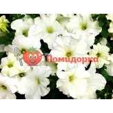 Петуния grandiflora F1 ТАНАКА White Kitano
