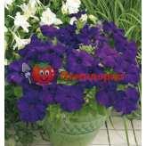 Петуния grandiflora Musica F1 Blue Volmary