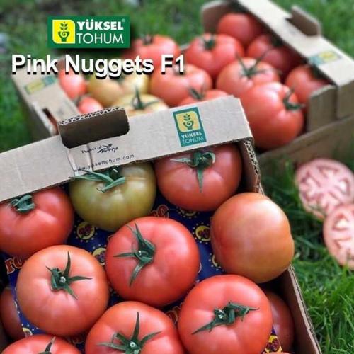 Томат ПIНК НАГЕТС F1 | PINK NAGETS F1 Yuksel