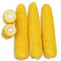 Кукуруза ГСС 3071 F1   GSS 3071 F1 Syngenta (Фасовка - 100 000 семян)