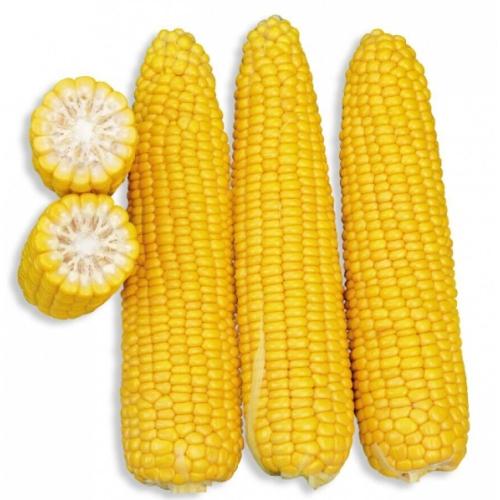 Кукуруза ГСС 3071 F1 | GSS 3071 F1 Syngenta