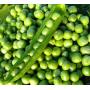 Горох ОЛИНДА   OLINDA Syngenta (Фасовка - 100 000 семян)