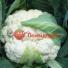 Капуста цветная БАРСЕЛОНА F1 | BARSELONA F1 Hazera (Фасовка - 2500 семян)