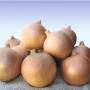 Лук озимый ВОЛЬФ F1 | VOLF F1 Hazera (Фасовка - 5000 семян)