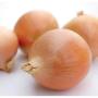 Лук озимый ИМАГО F1 | IMAGO F1 Hazera (Фасовка - 250 000 семян)