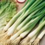 Лук на перо КАРЕЛ | KAREL Hazera (Фасовка - 50 000 семян)