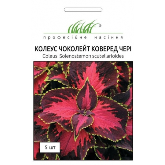 Колеус Блюма Сан Чоколет Коверед | Solenostemon scutellarioides Sun Chocolate