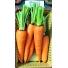 Морковь АБАКО F1 1.6-1.8 | ABAKO F1 Seminis (Фасовка - 1 000 000 семян)