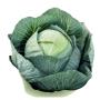 Капуста белокочанная ЭЛАСТОР F1 | ELASTOR F1 Syngenta (Фасовка - 2500 семян)