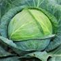 Капуста белокочанная КИЛАГЕРБ F1   KILAHERB F1 Syngenta (Фасовка - 2500 семян)