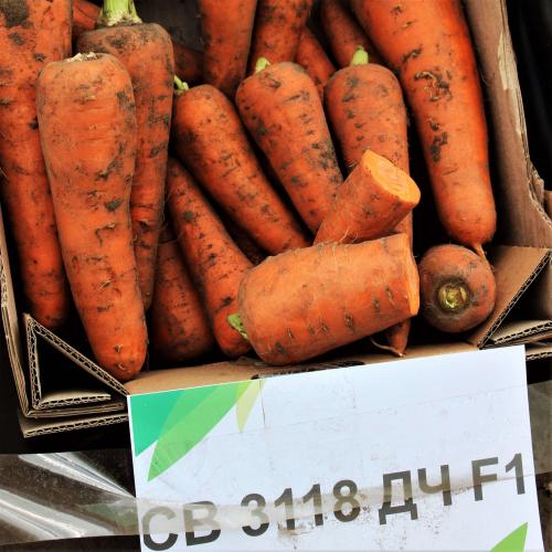 Морковь СВ 3118 F1 Seminis ( 2,0-2,2 )