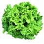Салат листовой ФАНЛИ F1 | FUNLY F1 Syngenta (Фасовка - 5000 семян)