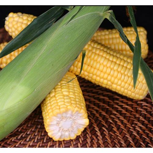 Кукуруза Оватона F1 | Ovatona F1 Clause
