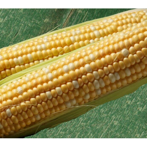 Кукуруза КАМБЕРЛЕН F1 | KAMBERLEN Clause
