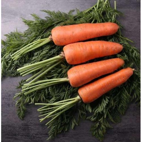 Морковь МИРАФЛОРЕС F1 | MIRAFLORENS F1 Clause ( 1,6-2,0 )