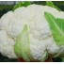 Капуста цветная Бригантина F1 | Brugantina F1 Clause (Фасовка - 2500 семян)