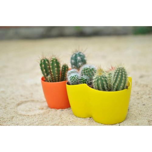 "Вазон для цветов ""Кактусник"" на 3 растения 1,1л"
